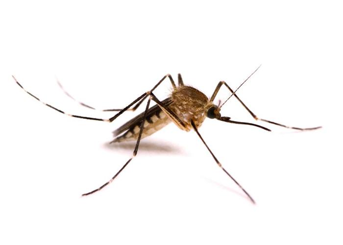 kalamazoo-pest-control-mosquitos