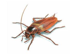 kalamazoo-pest-control-roaches