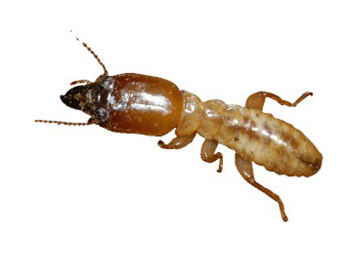 kalamazoo-pest-control-termites