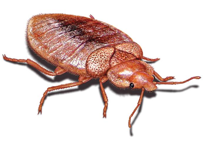 kalamazoo-pest-control-bed-bugs